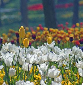 İstanbul'da bahara çiçeklerle 'merhaba'