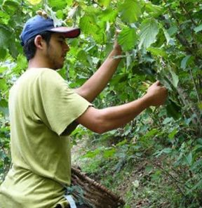 Mevsimlik işçilere müjde!
