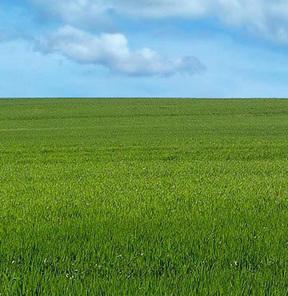 2B arazileri satılıyor