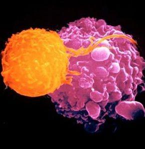 Türk bilim adamları, kanser tedavisinde dünya çapında bir başarıya imza attı