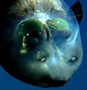 Okyanusun en tuhaf canlısı