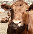 İthal et fiyatları neden düşürmedi?