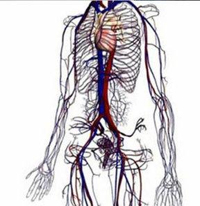 Google Anatomi Uygulamasını Başlattı
