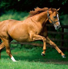 Sevgiliye at!