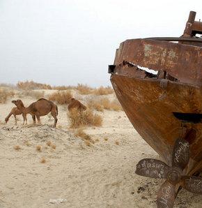 Aral Gölü, Aralkum çölü olma yolunda