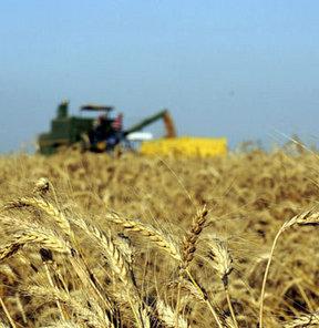 Buğdayda gümrük vergisi indirimine destek!