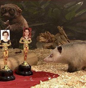 Şaşı fare Heidi Oscar seçimini yaptı