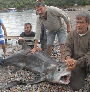 350 kiloluk 'panter-sapan'