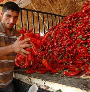 Kırmızı biber sezona hazır