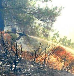 Ormanı ateşe verip kaçtılar