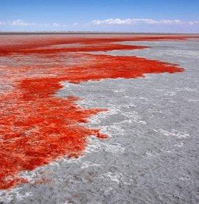 Tuz Gölü, kan gölüne döndü! GALERİ
