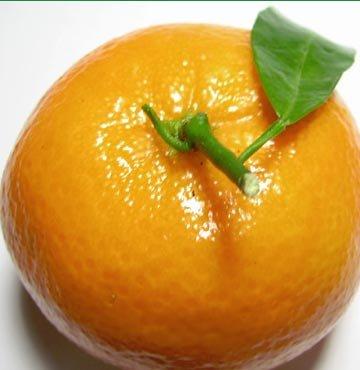 Mandarine tescil istedi