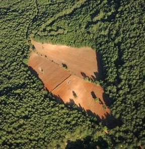 2B yasası, Orman vasfını yitirmiş arazilerin satışı, yasa tasarısı
