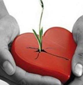 organ nakli organ bağışı Organ Temininde Yeni Adımlar