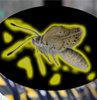 Mutant kelebek alarmı!