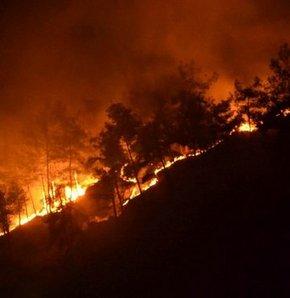 Didim'de orman yangını