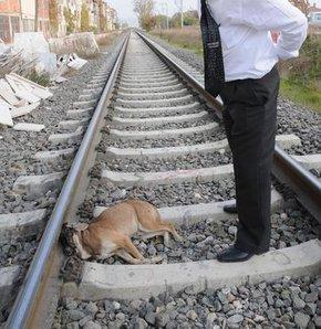 Kütahya'nın Tavşanlı ilçesinde boxer cinsi bir köpek tren raylarına tasmasından bağlanarak ölüme bırakıldı. Bir süre sonra oradan geçer bir yük trenide raylarda yatan köpeği farketmeyince üzerinden geçerek ölümüne neden oldu.
