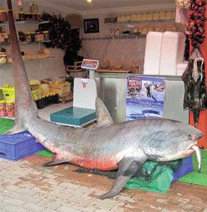 Dev köpekbalığı İstanbul'da