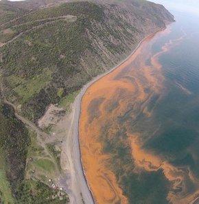 Tekirdağ Şarköy açıklarında Marmara Denizi'nin rengi şaşırttı