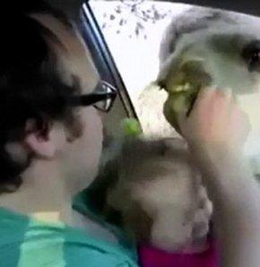 Bebeği ısırmaya çalışan deve tıklanma rekorları kırıyor
