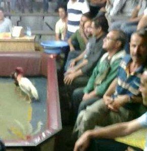 İzmir'in Bornova İlçesi'nde, horoz dövüşü yapıldığı belirlenen ruhsatsız bir kahveye yapılan baskında 34 kişi yakalandı. Dövüştürülen 2 horoza el konulurken, yakalanan kişiler hakkında işlem yapıldı.