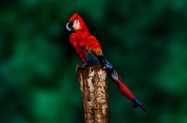 Bunu Bir Papağan Mı Sandınız Son Dakika Haberler