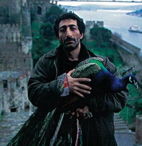 33. İstanbul Film Festivali, Türk sineması