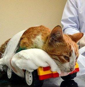 Kedi Umut'un ağzından savcılığa dilekçe yazıldı