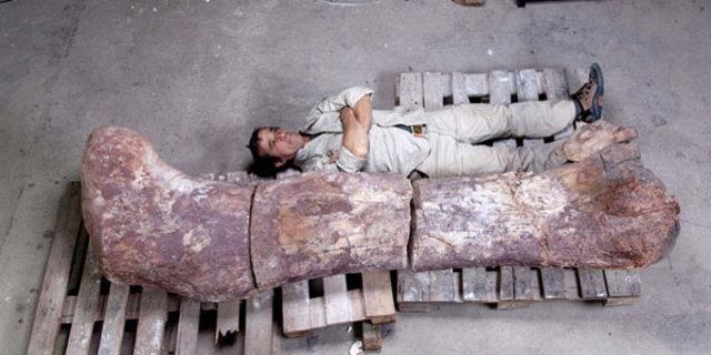 En büyük dinozor bulundu, Arjantin'de dünyanın en büyük dinozoru bulundu, 150 kemikli dev dinozor, Arjantin'de dev dinozor.