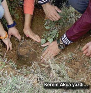 Kerem Akça yazıları, Kerem Akça Habertürk, Kerem Akça 'İzleyici Meşe' projesi,  'İzleyici Meşe' projesi