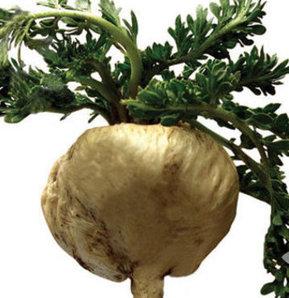 Kısırlık için bitki, Kısırlığa iyi gelen bitkiler, Kısırlığa iyi gelen bitkiler neler?, Maca bitkisi nelere iyi gelir?