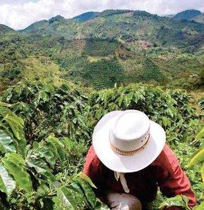 Küba ve Kahve, Kahve Küba'dan mı gelir?