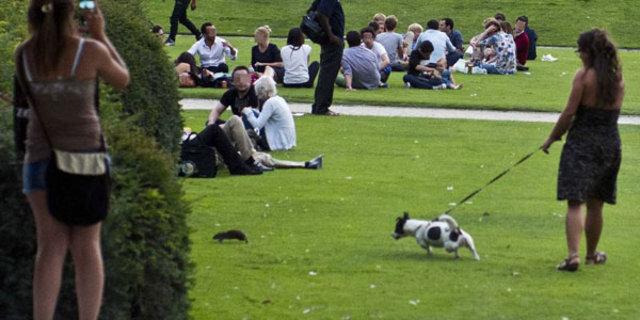 Paris'i fareler bastı!, piknikler, Paris'e fareleri çekti, Louvre Müzesi, fare, fransa