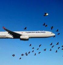 Havada 'kuş sürüsü' ihalesi