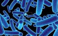 Bağırsaktaki bakterileri ruh halinizi etkiliyor