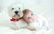 Evcil hayvan astım riskini azaltabilir