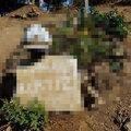 Kurtiz'in mezarı ortalığı karıştırdı!
