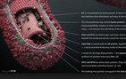 Ebola virüsü hakkında çok önemli açıklama!