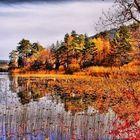 Sonbahar rotasında Abant Gölü