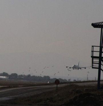 Atatürk Havalimanı'nda ölü kuş alarmı