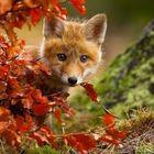 Sonbaharın gelmesine sevinen hayvanlar