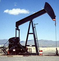 Açılan kuyulardan petrol fışkırıyor!