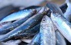 Çiğ balık yemek ciddi rahatsızlıklara neden oluyor