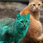 Bulgaristan'ın Varna kentinde görülen yeşil kedinin sırrı çözüldü