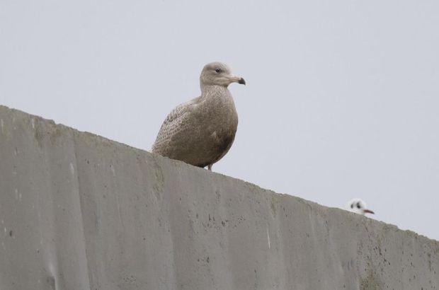 Rize'de yeni kuş türü keşfedildi, kuş türleri