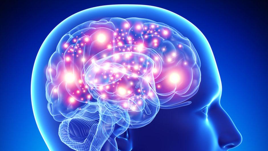 İnsan beyninde