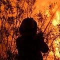 Avustralya ormanları yanıyor