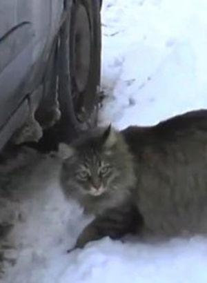 Kedi, bebeği donmaktan kurtardı