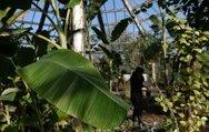Şifayı evinizde yetiştirdiğiniz bitkiyle bulun