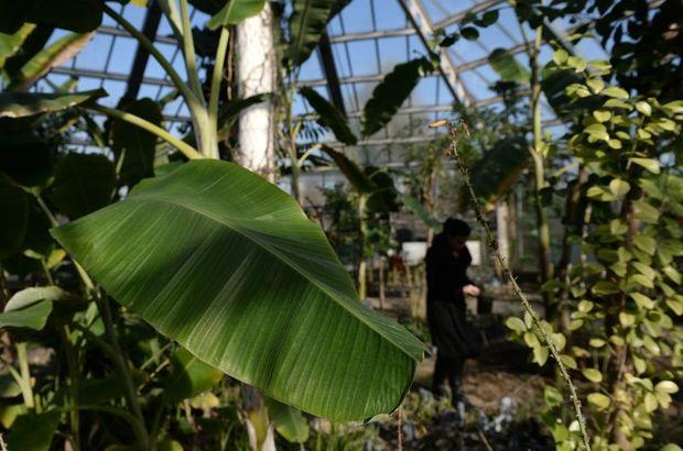 Şifayı evinizde yetiştirdiğiniz bitkiyle bulun, Şifalı Bitkiler, Alternatif Tıp, Bitkilerle Tedavi